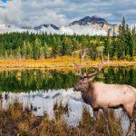 Jasper National Park een hoogtepunt tijdens een huwelijksreis Canada